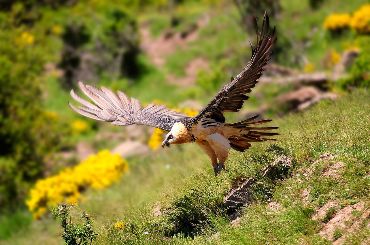 El inicio del otoño es perfecto para el turismo ornitológico. Foto: Shutterstock