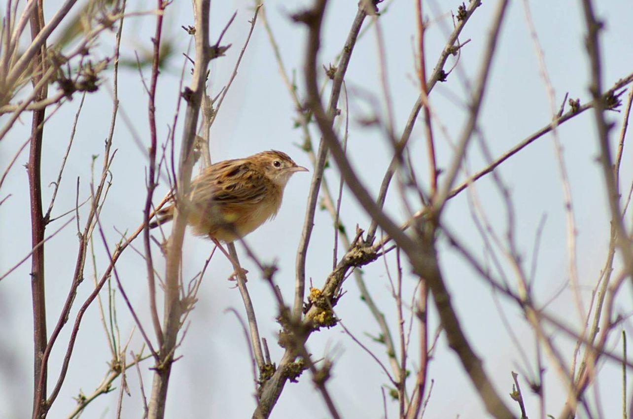 Observación de aves en las faces y roquedos prepirenaicos
