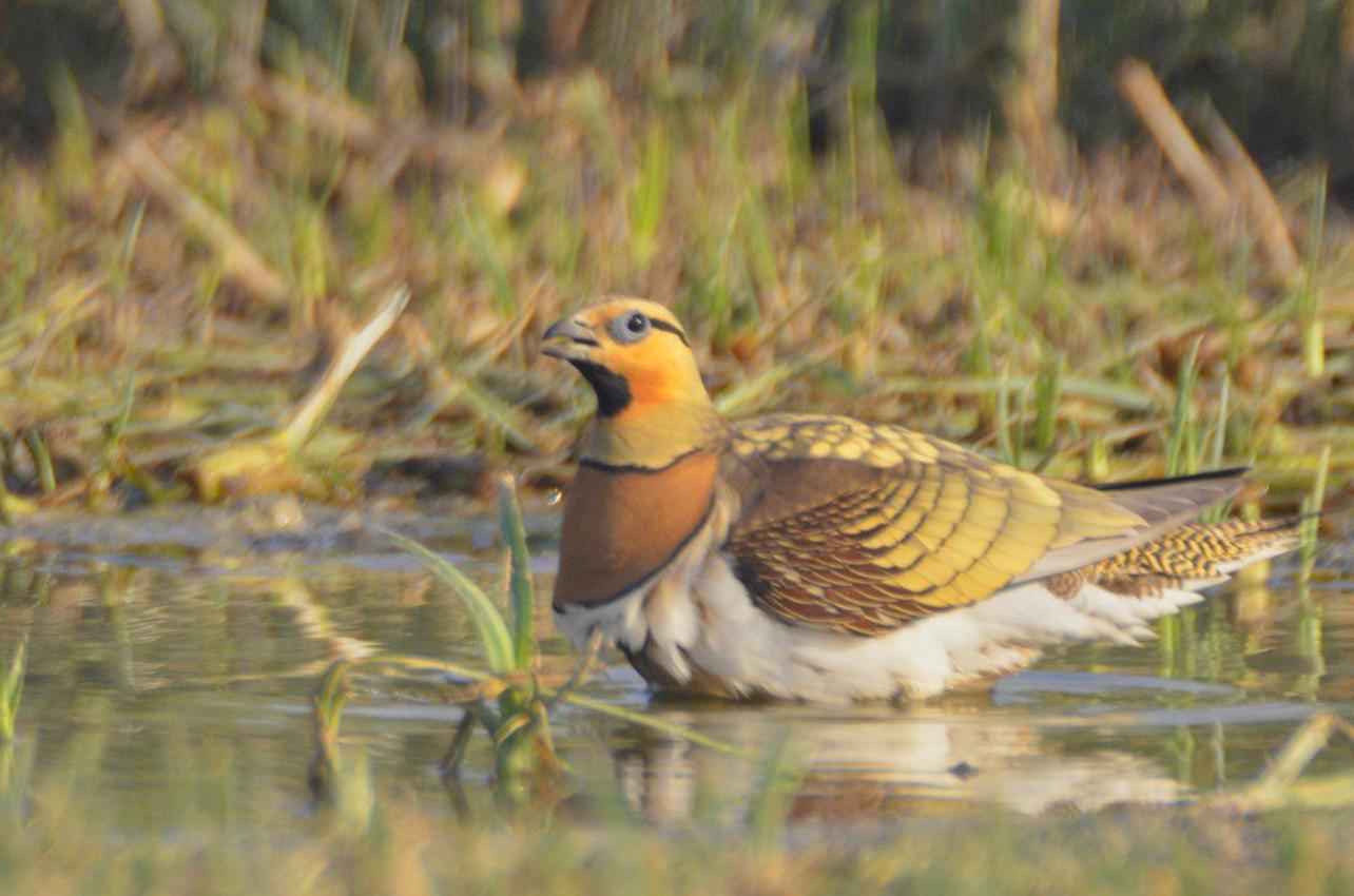 Observación de aves de La Mancha Húmeda en Toledo