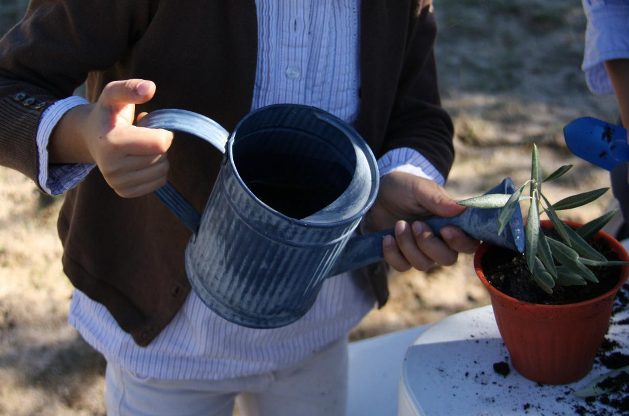 Ya sabemos plantar un olivo. Foto: Johanna Saldón