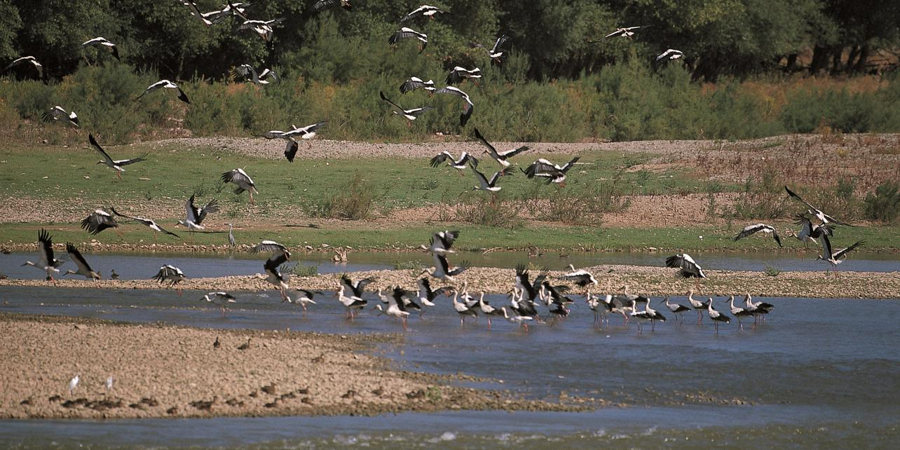 Reserva Natural Los Sotos del Ebro