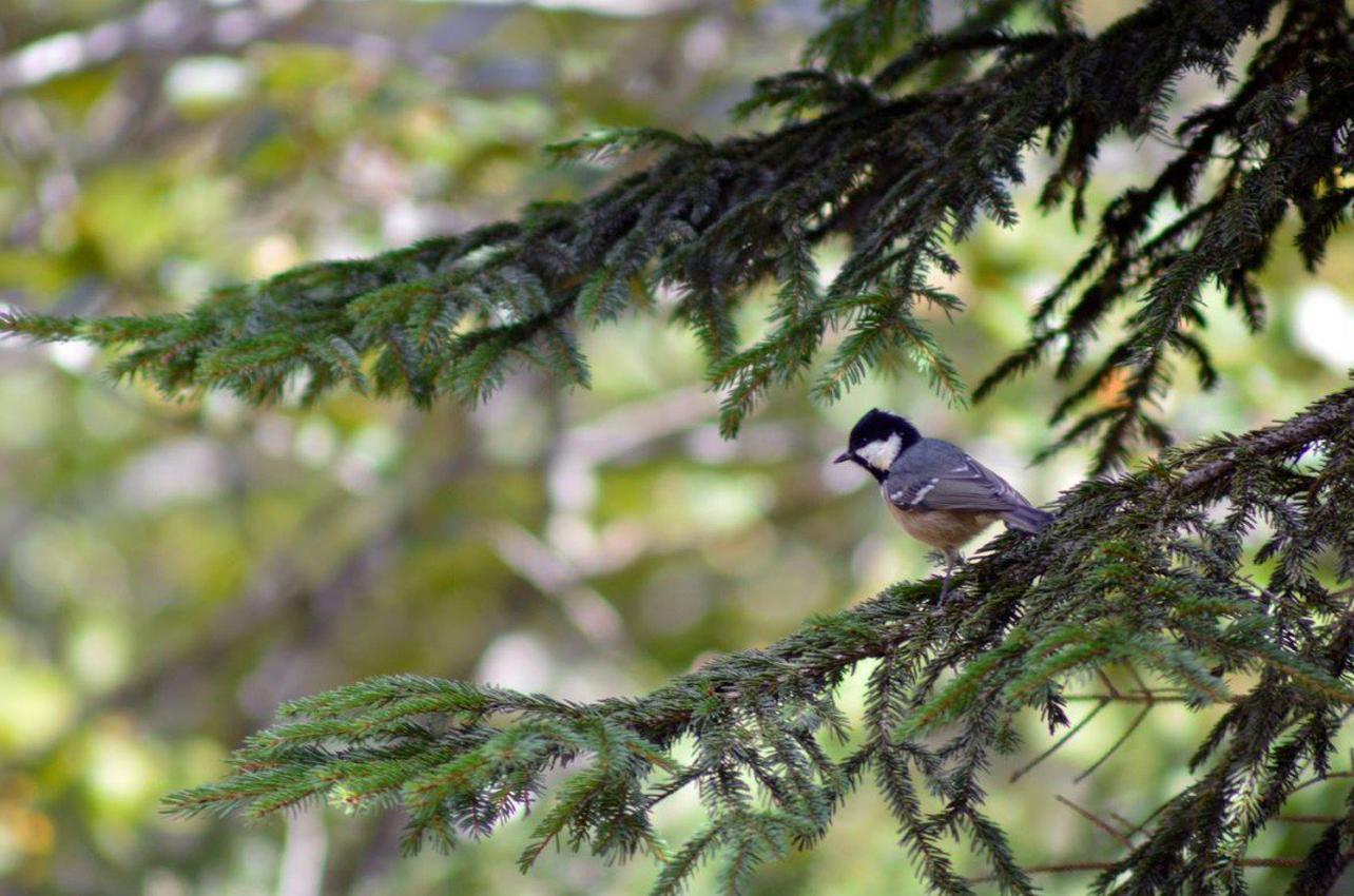 Observación de aves en las Bardenas reales