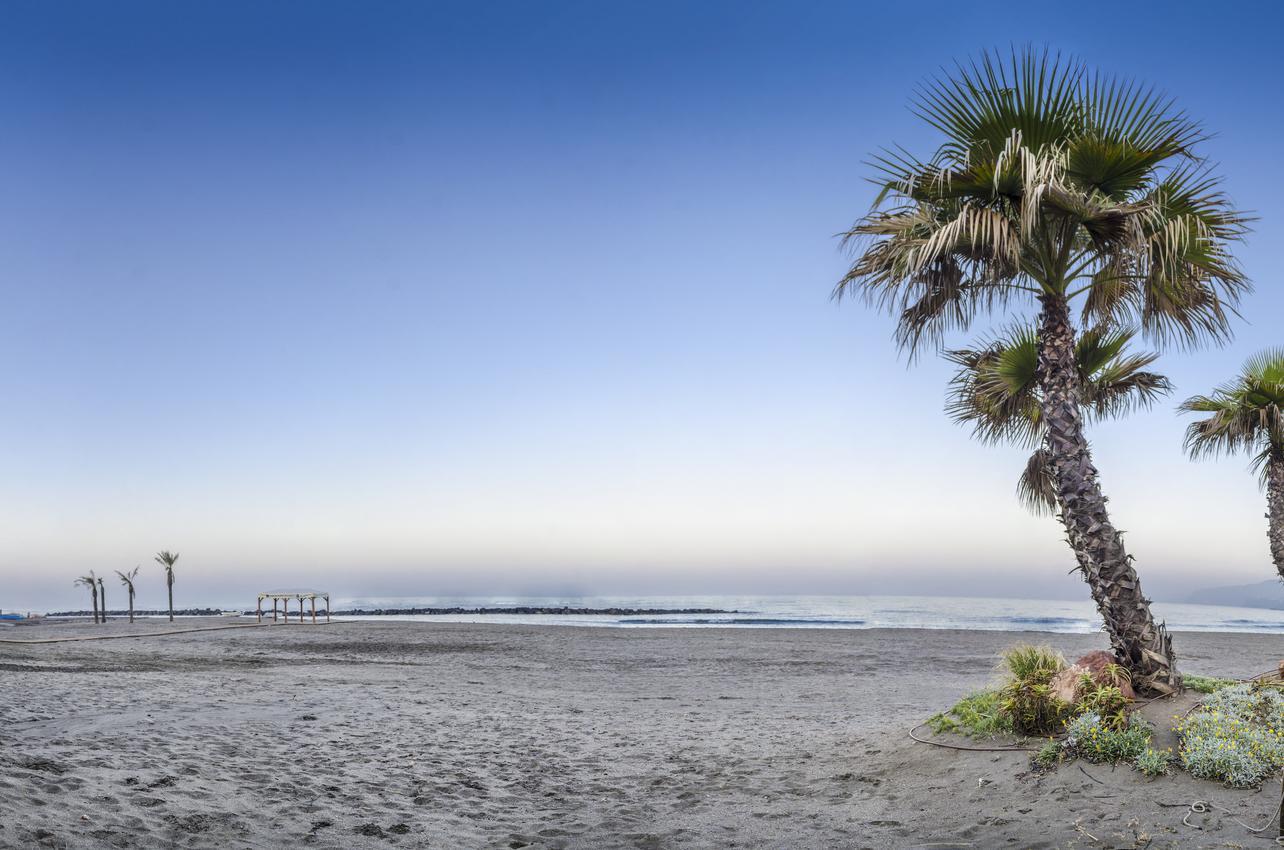Palmeras en Playa Nueva Almería. (Foto: Ayuntamiento de Almería.)