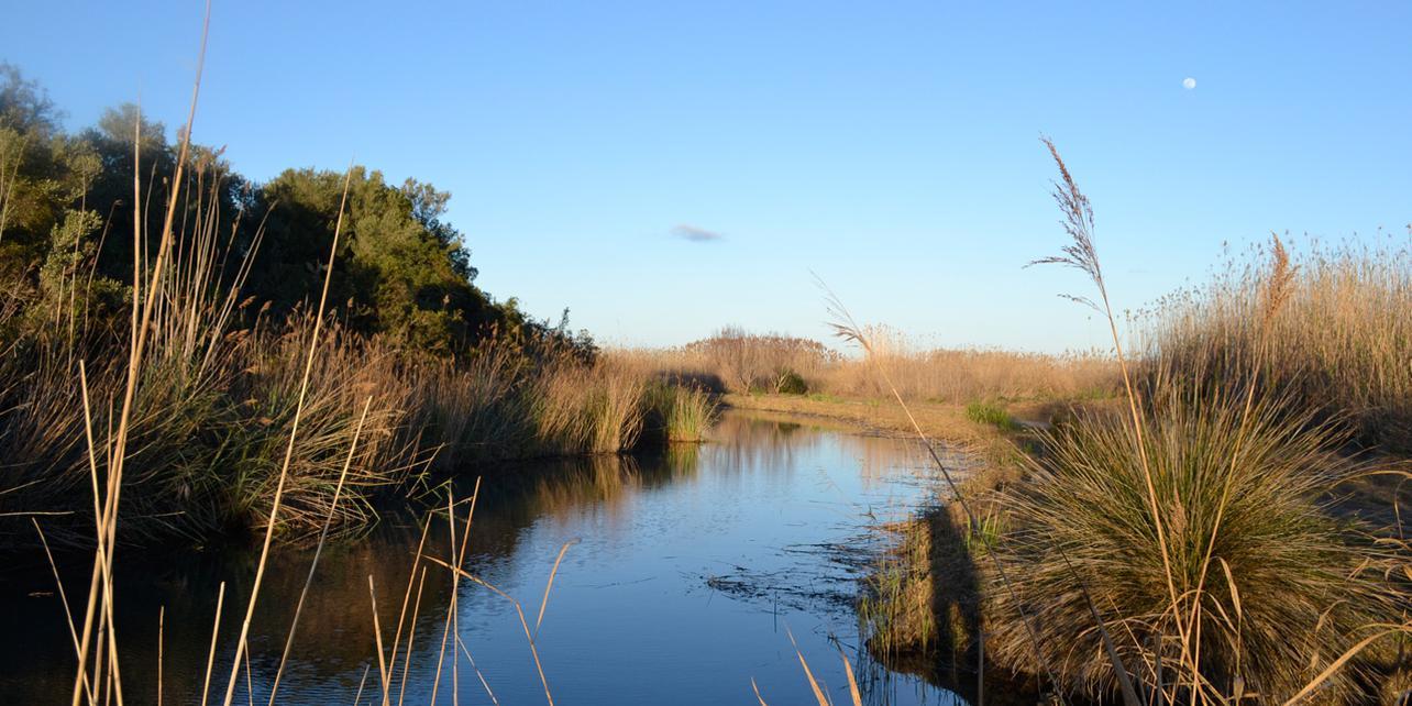 Parque Natural de la Marjal de Pego-Oliva