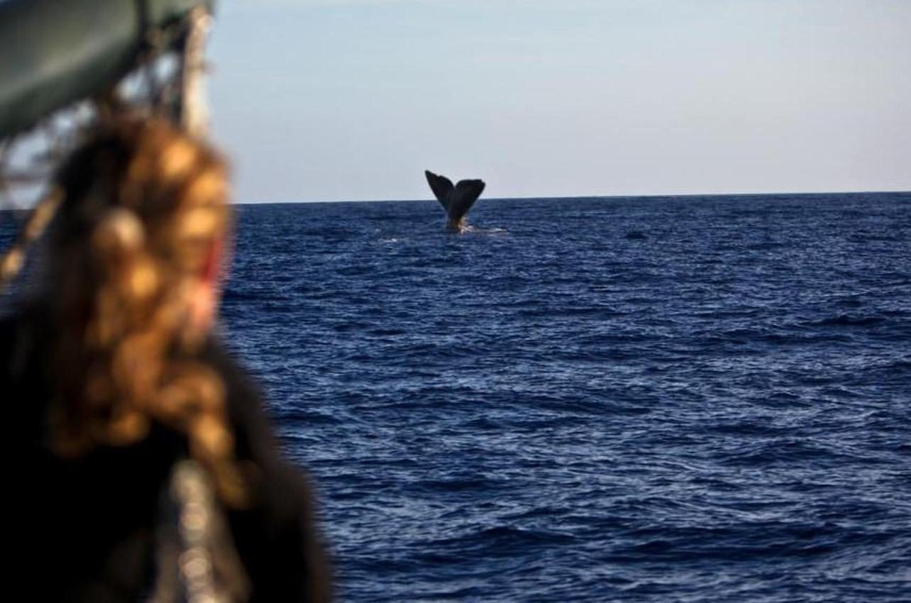 Observación de ballenas en La Palma