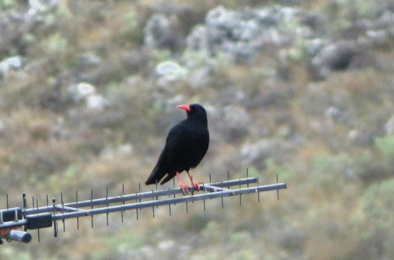 Observación de aves con vehículo en Segovia