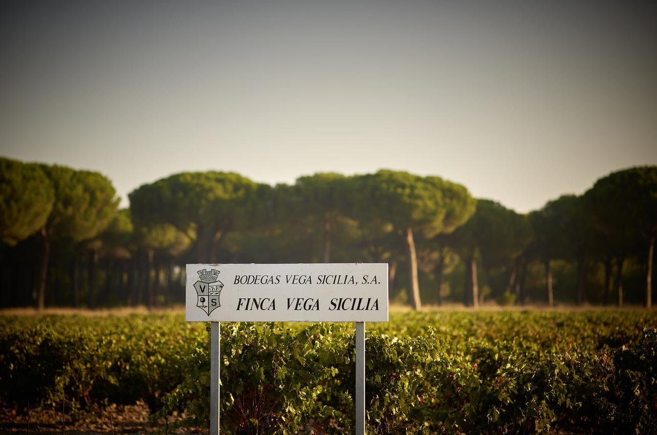 Bodegas Vega Sicilia S.A.