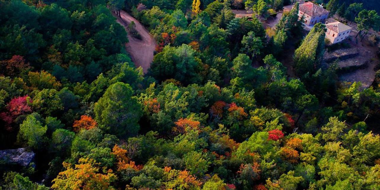 Bosque de Poblet
