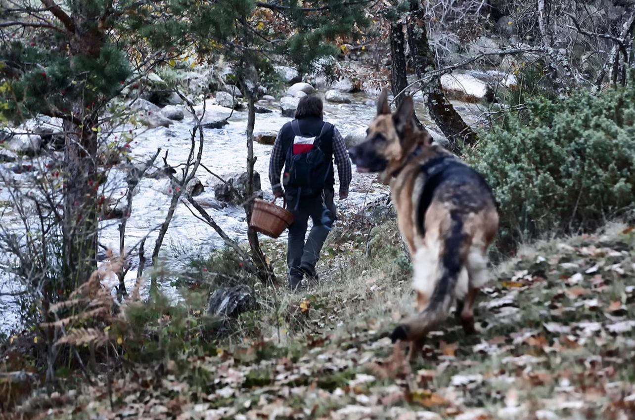 Un buen guía, una cesta y un perro que conocen los rincones más recónditos del bosque. Foto: Roberto Ranero