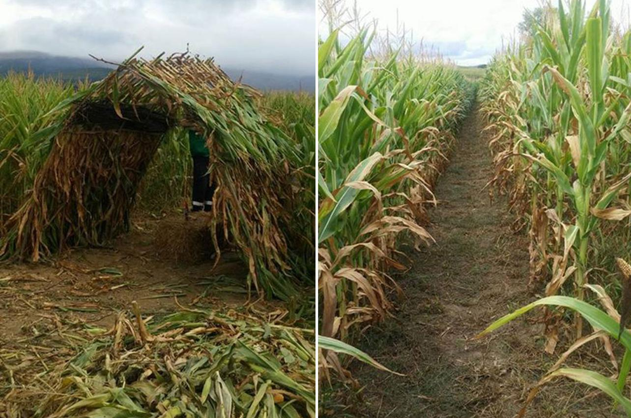 Para disfrutar de esta aventura hay que darse prisa porque finaliza con la cosecha. Foto: Web Asociación Cultural Garbino.