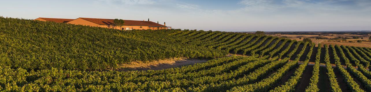 Bodegas y Viñedos Viña Magna