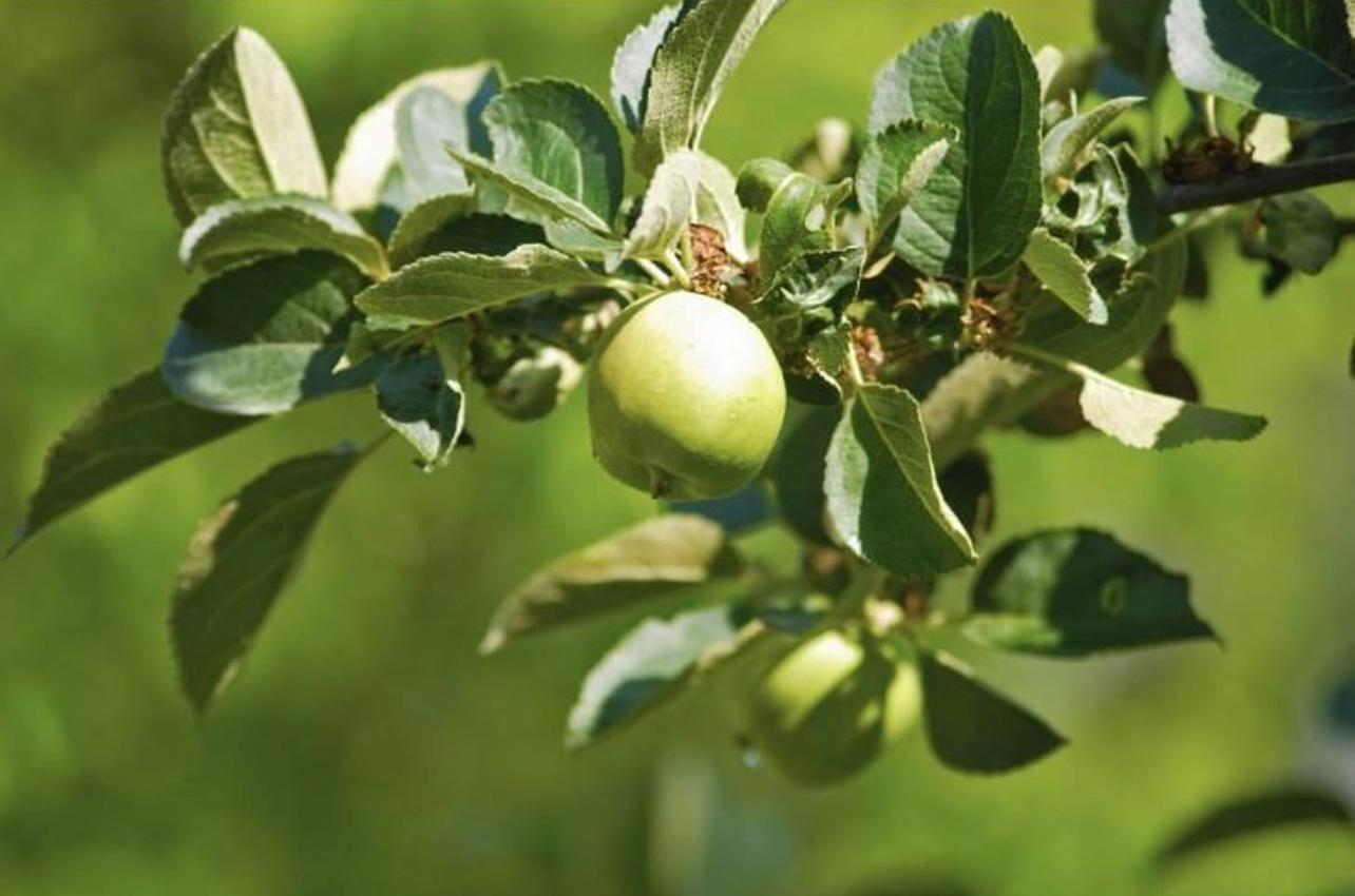 Agricultura ecológica en Madrid