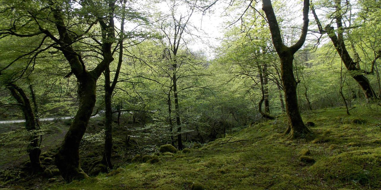 Parque Natural del Saja-Besaya
