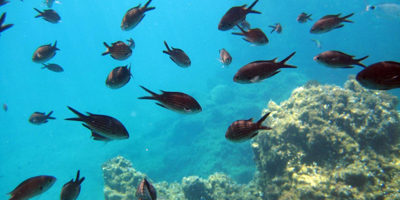 Reserva marina dels Freus