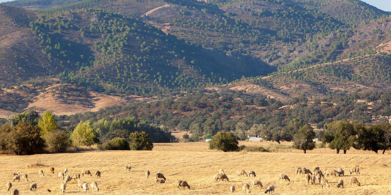 Paraje Natural de las Peñas de Aroche