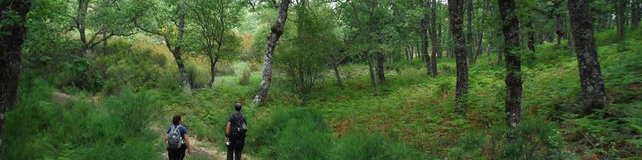 Observación de lobo y ciervo en la Sierra de la Culebra