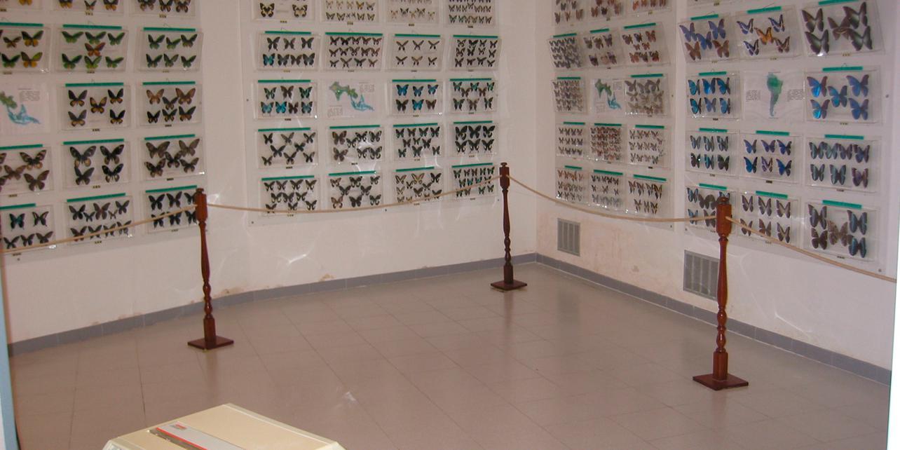 Museo de las mariposas