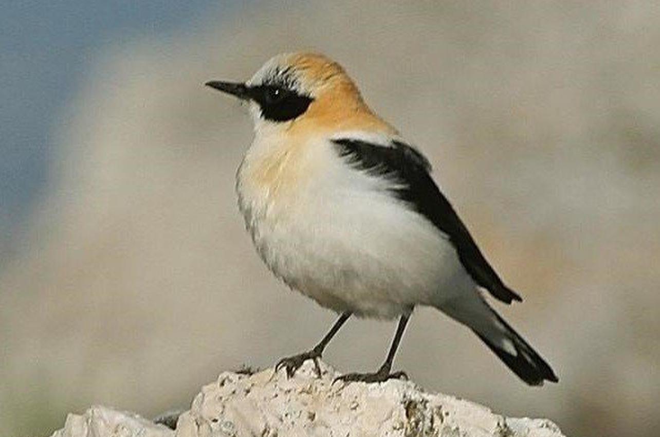 Observación de aves en Torcal de Antequera