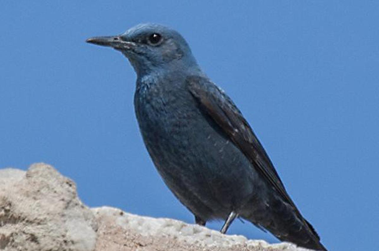 Observación de aves en Doñana