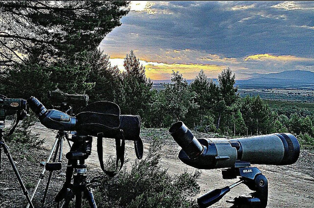 Observación de oso pardo salvaje en Asturias