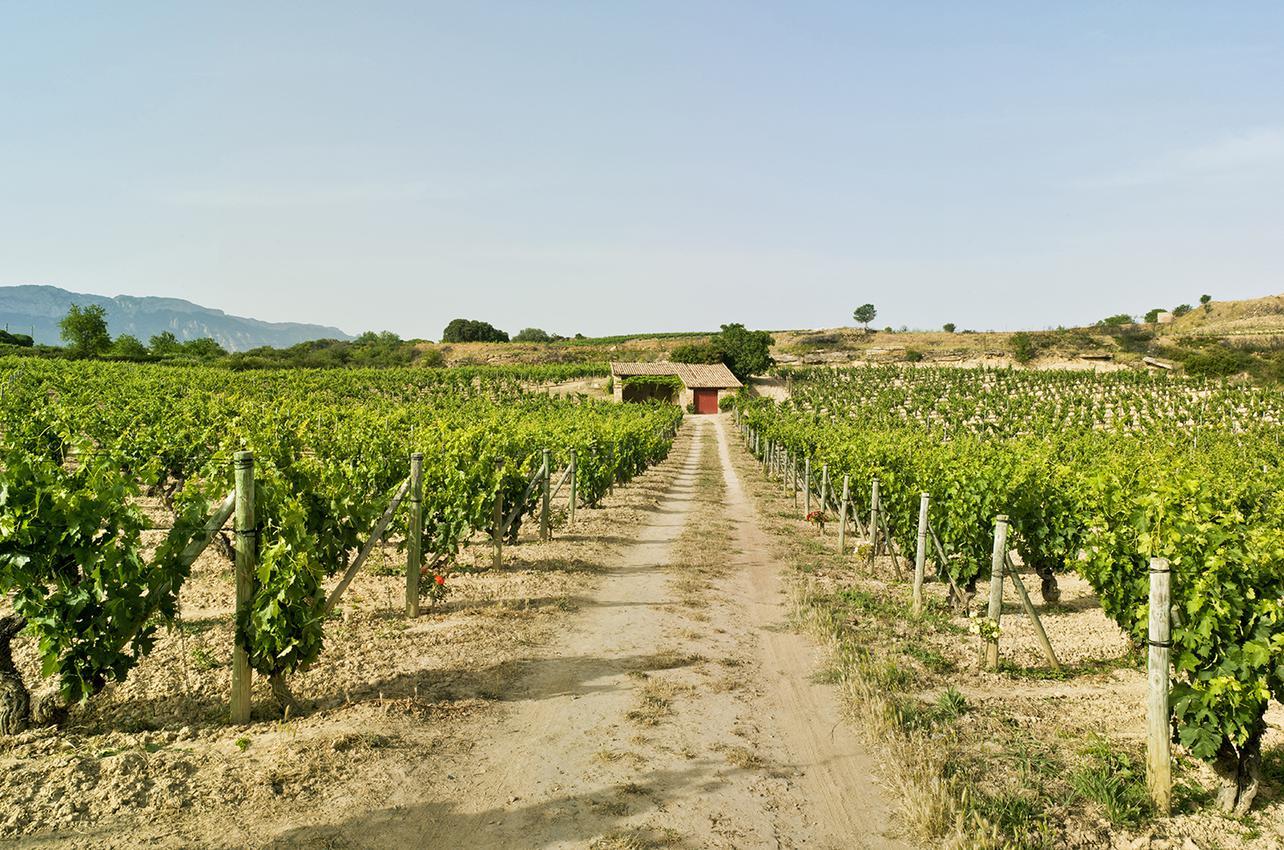 Bodegas y Viñedos Artadi