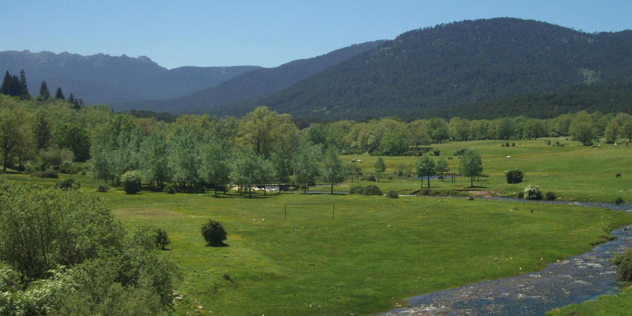 Pinar y Montes de Valsain