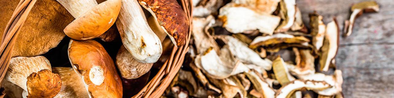 Pinares con 150 variedades de hongos