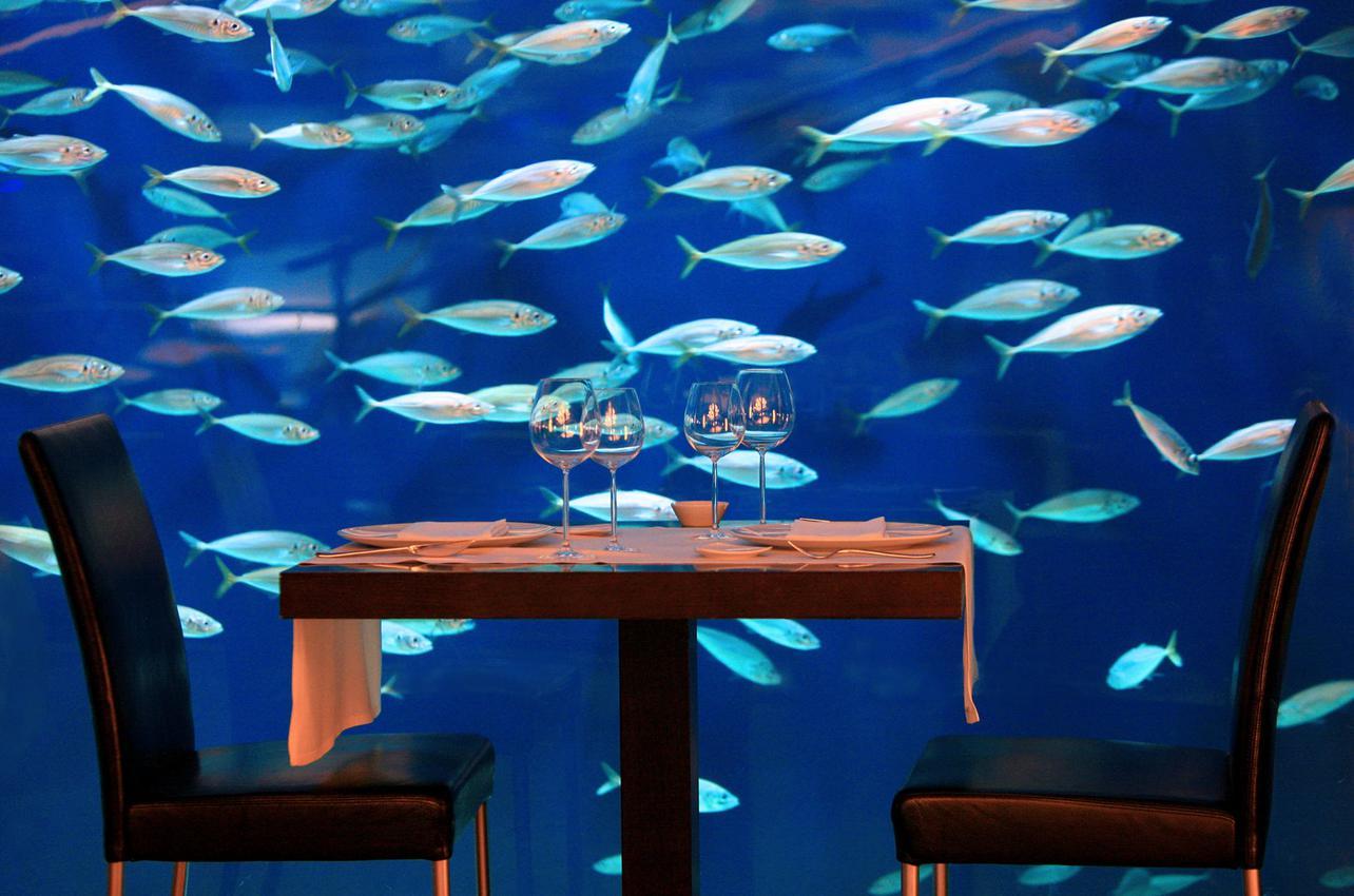 Una cena pasada por agua en el Oceanográfic