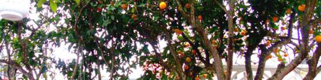 Orange Garden Bed & Breakfast