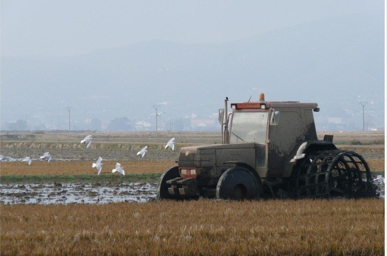 Pack gastronómico del arroz en el Delta del Ebro