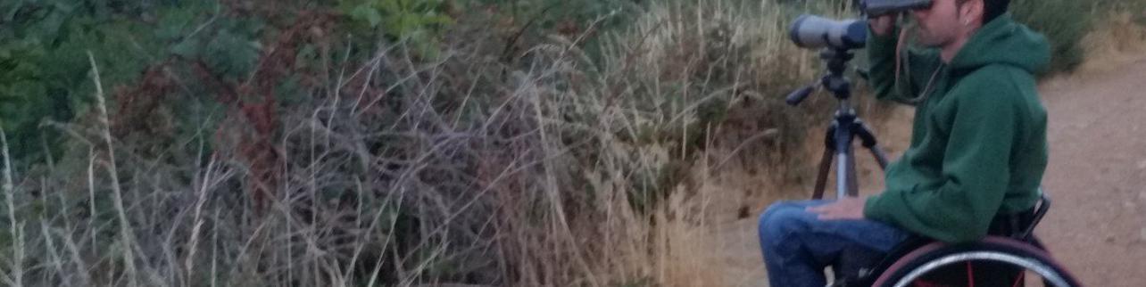 Observación de lobo ibérico en la S. de la Culebra en Zamora
