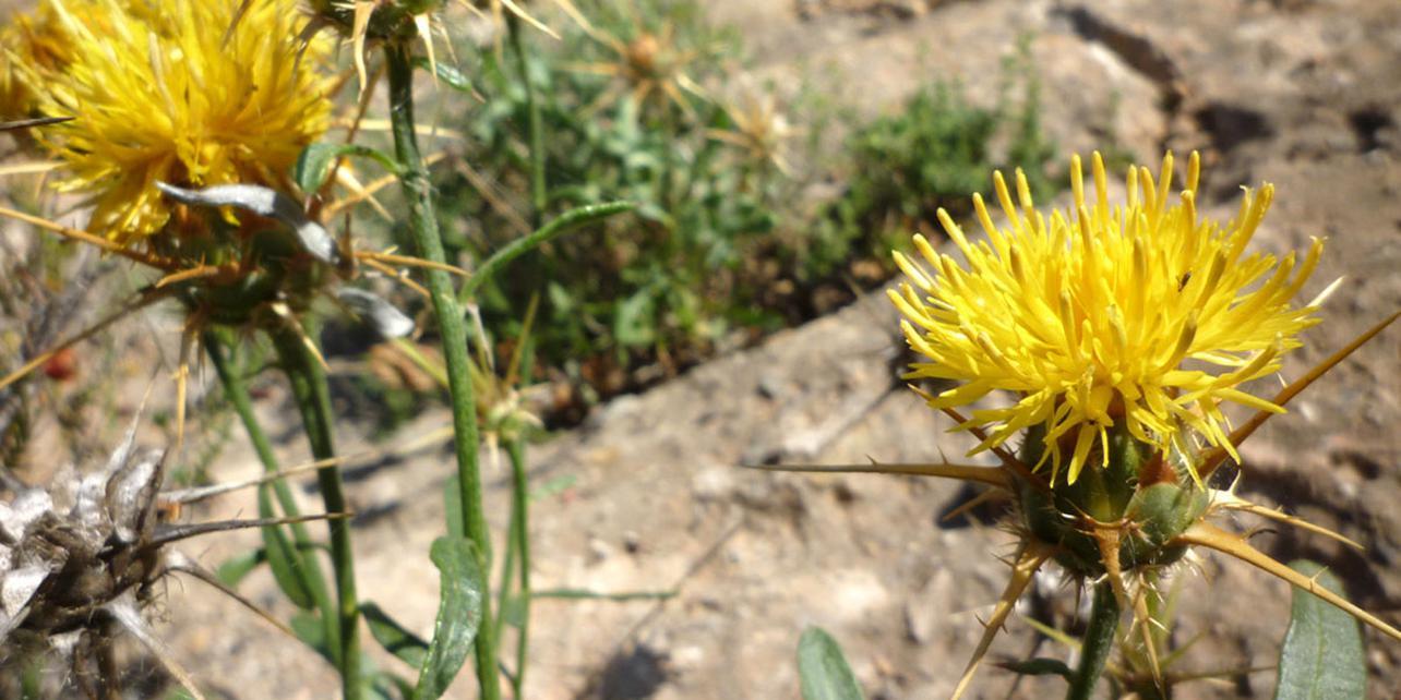 Paraje Natural de la Sierra de Callosa