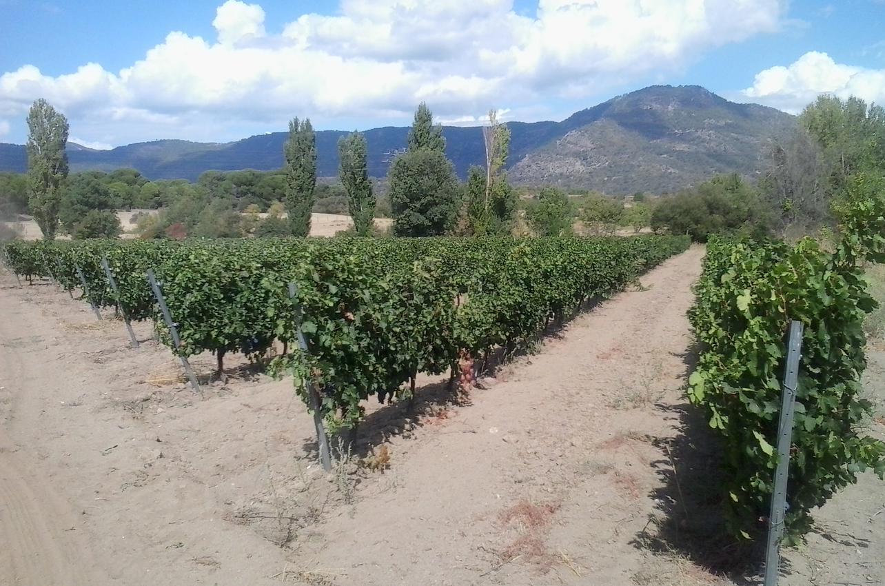 Bodegas y Viñedos Buenpaso, s.l.