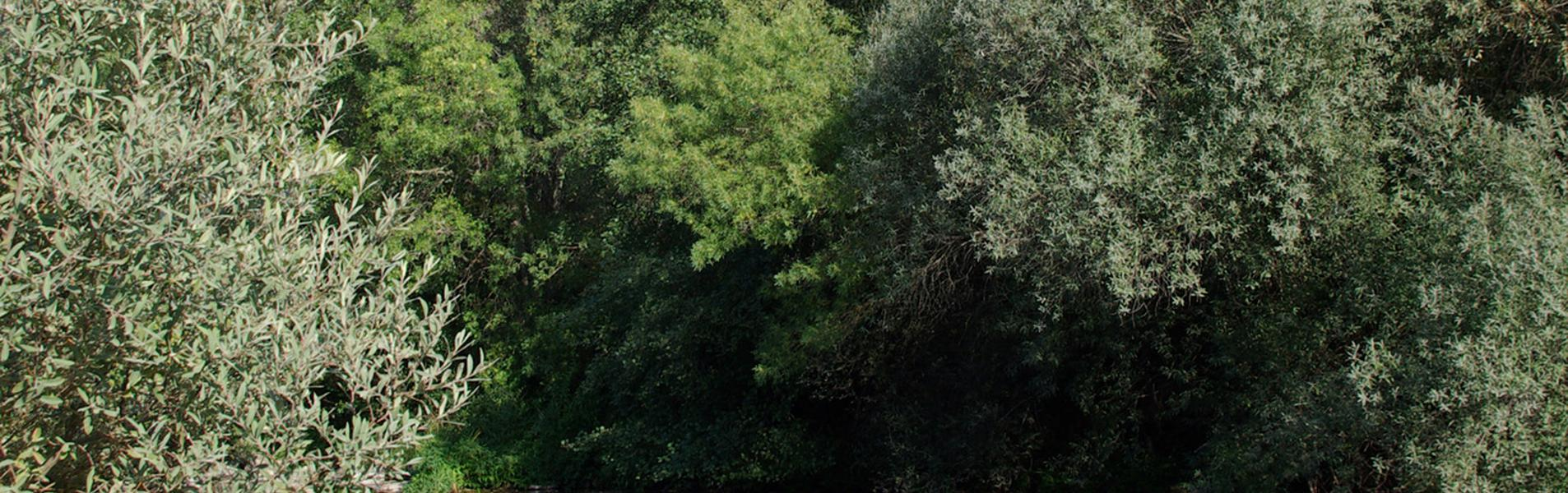 Monterrubio de la Sierra