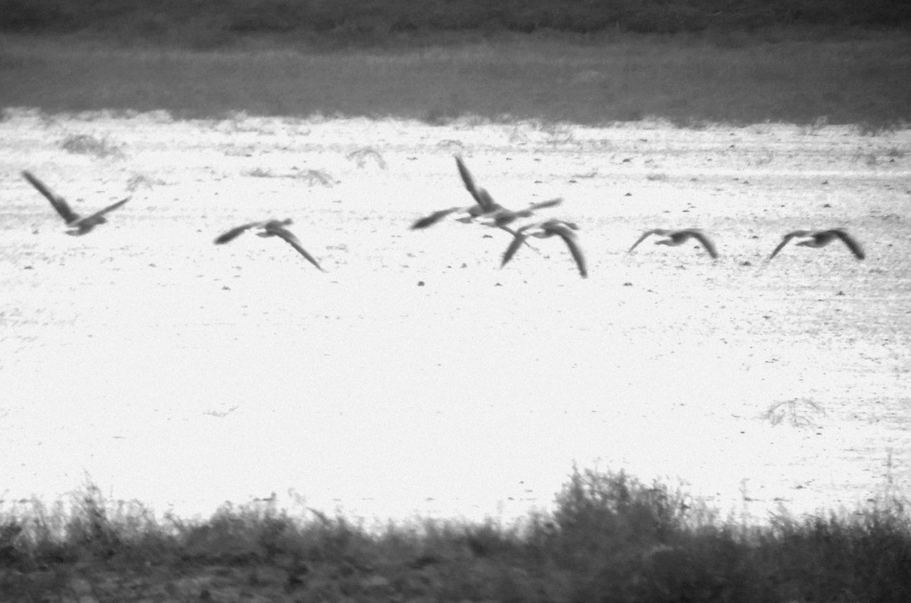 Observación aves en las Lagunas de Villafáfila en Zamora