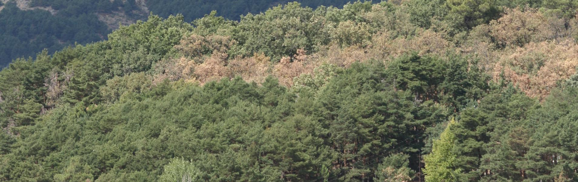 Miraflores de la Sierra