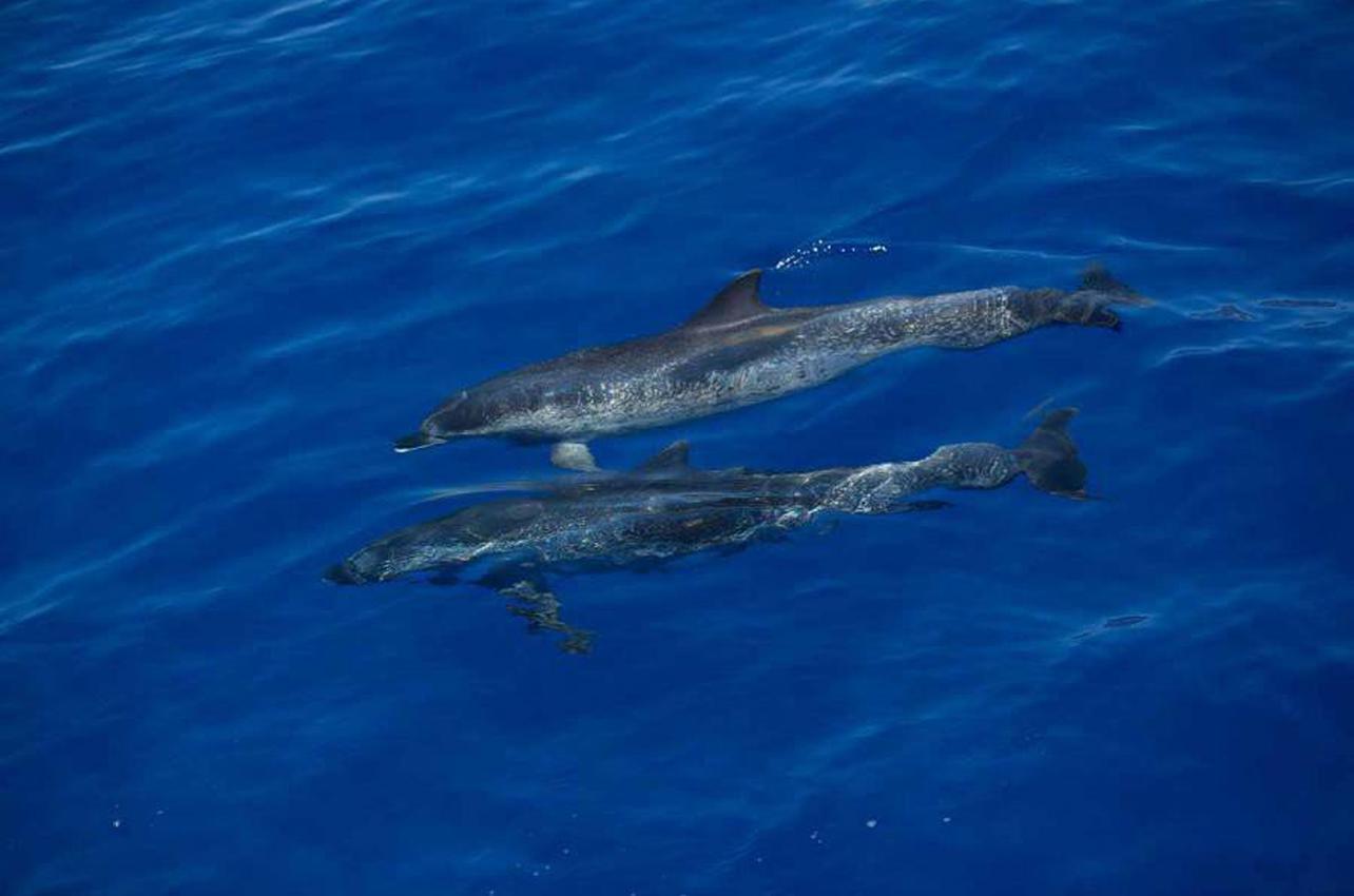Navega para observar delfines y ballenas en La Palma