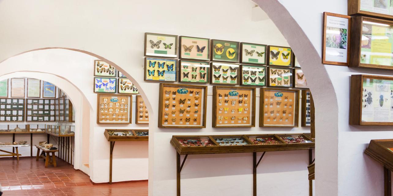 Museo de Ciencias Naturales de Menorca