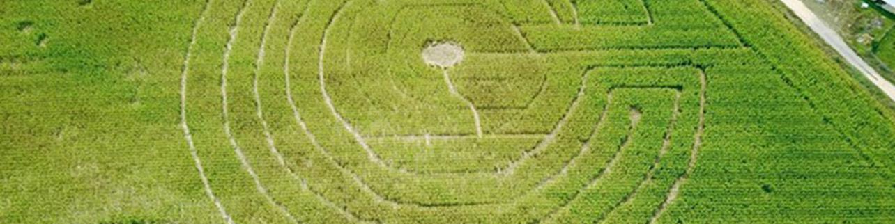 Perderse en el laberinto gigante de maíz